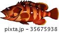アカハタ(魚) ベクター 35675938