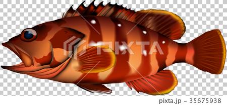 矢量 鱼 海洋 35675938
