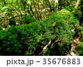 屋久島 白谷雲水峡 35676883