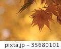 紅葉 35680101