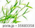 七夕の笹 35683358