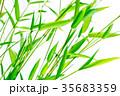 七夕の笹 35683359
