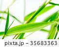 七夕の笹 35683363