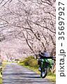 桜並木(太田川桜堤) 35697927