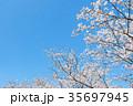 桜と青空 35697945