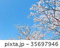 桜と青空 35697946