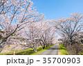 桜並木(太田川桜堤) 35700903