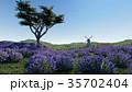 ラベンダー 藤色 野原のイラスト 35702404