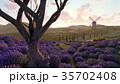 ラベンダー 藤色 野原のイラスト 35702408