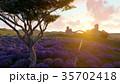 ラベンダー 藤色 野原のイラスト 35702418