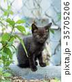 黒猫 子猫 動物の写真 35705206