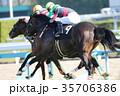 競馬 競走馬 日本中央競馬会の写真 35706386