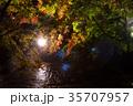 紅葉 ライトアップ くらもち滝の里の写真 35707957