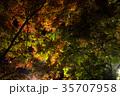 紅葉 ライトアップ 秋の写真 35707958