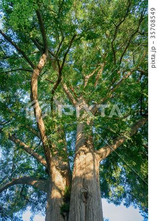 常緑樹, エコロジーイメージ 35708549