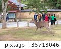 奈良公園 11月 秋の写真 35713046