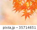 紅葉 カエデ 葉の写真 35714651