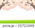 梅 白梅 梅の花のイラスト 35721009