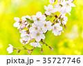 桜 花 春の写真 35727746