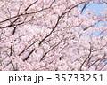 桜 35733251