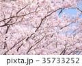 桜 35733252