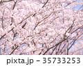 桜 35733253