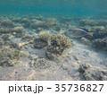Underwater world of the Red Sea in Egypt 35736827