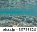 Underwater world of the Red Sea in Egypt 35736828