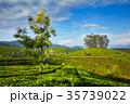 茶畑 インド 印度の写真 35739022
