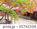 奈良公園 11月 秋の写真 35742338