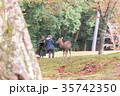 奈良公園 11月 秋の写真 35742350