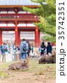 奈良公園 11月 秋の写真 35742351