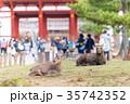奈良公園 11月 秋の写真 35742352