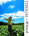 新座市総合運動公園の本多の森お花畑(かかしの風景) 35743622
