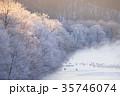 川霧 丹頂鶴 冬の写真 35746074