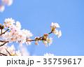 桜と青空 35759617