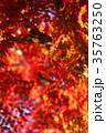 紅葉 秋 楓の写真 35763250
