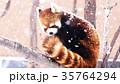 雪 積雪 動物園の写真 35764294