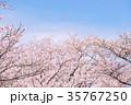 桜 35767250