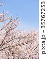 桜 35767253