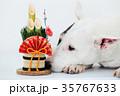 ブルテリア 犬 門松の写真 35767633