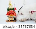 ブルテリア 犬 門松の写真 35767634
