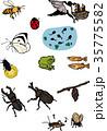 日本の四季10自然の生き物 35775582