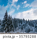 snow covered spruce forest in winter 35793288