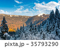 snowy conifer forest in mountains 35793290