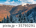 snowy conifer forest in mountains 35793291