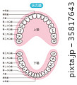永久歯 歯の名称 35817643