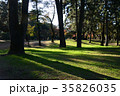 秋の前橋敷島公園松林 35826035