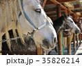 『馬の王子様』 ~厩舎の馬 35826214