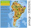 南米大陸 動物 鳥のイラスト 35829291